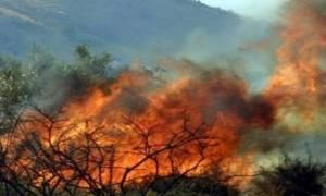 Φωτιά ΤΩΡΑ στην περιοχή Διάσελλα Ηλείας – Κινδύνεψε ηλικιωμένη (pics & vid)