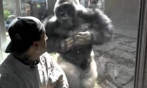 Θαύμαζαν τους γορίλες στο ζωολογικό κήπο. Αυτό που είδαν ξαφνικά, τους έκανε να τρομάξουν (Video)
