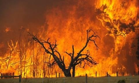 Δέκα χρόνια από τις φονικές φωτιές στην Ηλεία: Το χρονικό της ανείπωτης εθνικής τραγωδίας (vid)