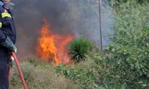 Μεγάλη φωτιά στην περιοχή Βίγλα Σαλαμίνας