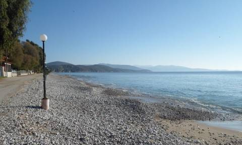 Αργολίδα: Δεν πίστευαν στα μάτια τους οι λουόμενοι – Γιγαντιαίο καλαμάρι βγήκε στη παραλία (pic)