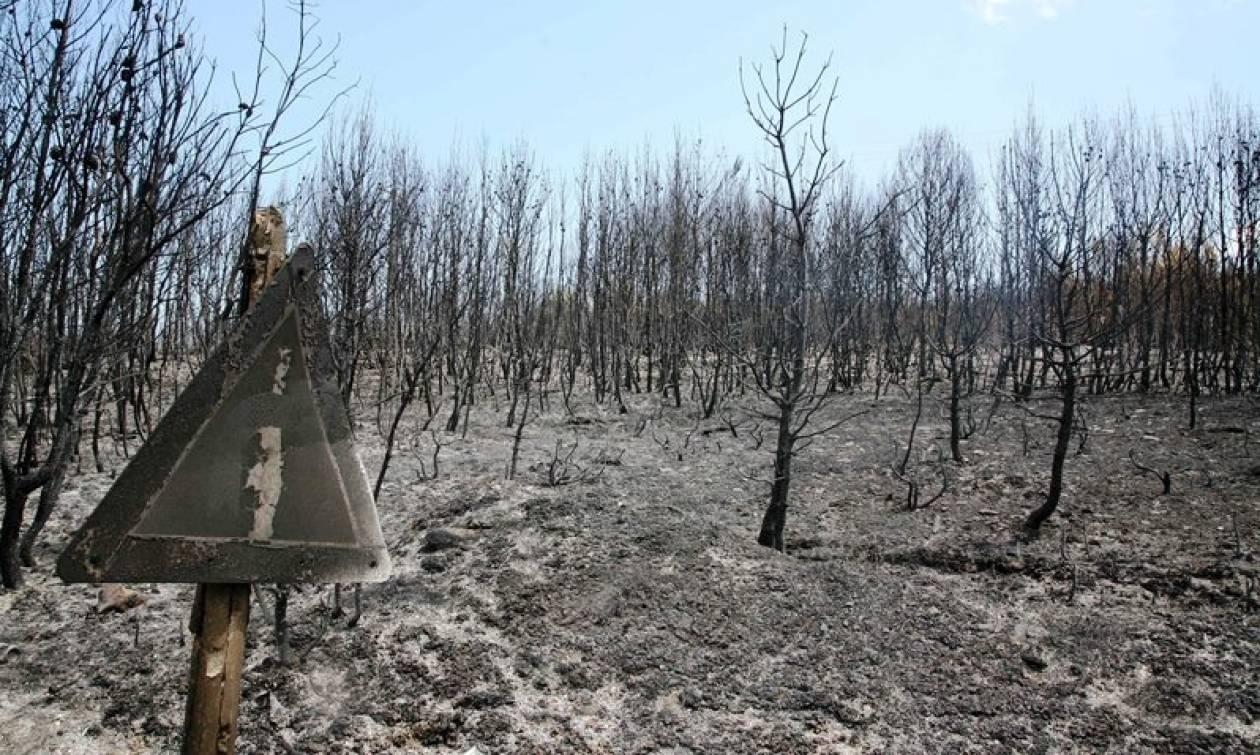 ΥΠΕΝ: Αναδασωτέες θα κηρύσσονται οι καμένες εκτάσεις