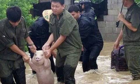 Viral η φωτογραφία γουρουνιού που... χαμογελά ενώ το σώζουν από πνιγμό!