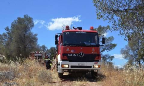 Ηλεία: Εμπρηστικός μηχανισμός εντοπίστηκε κοντά σε δάσος
