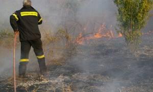 Υπό έλεγχο τέθηκε η πυρκαγιά στα Φάρσαλα