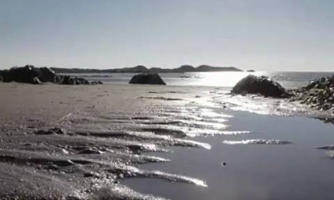 Πήγαν για μπάνιο, όμως το θαλάσσιο τέρας που βρήκαν στην ακτή τους έκανε να το αποφύγουν... (vid)
