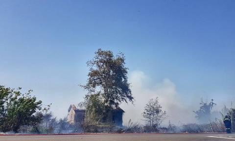 Φωτιές Ηλεία: Μεγάλες πυρκαγιές σε Λεχαινά και Ανδραβίδα - Απειλείται η Αρετή (pics)