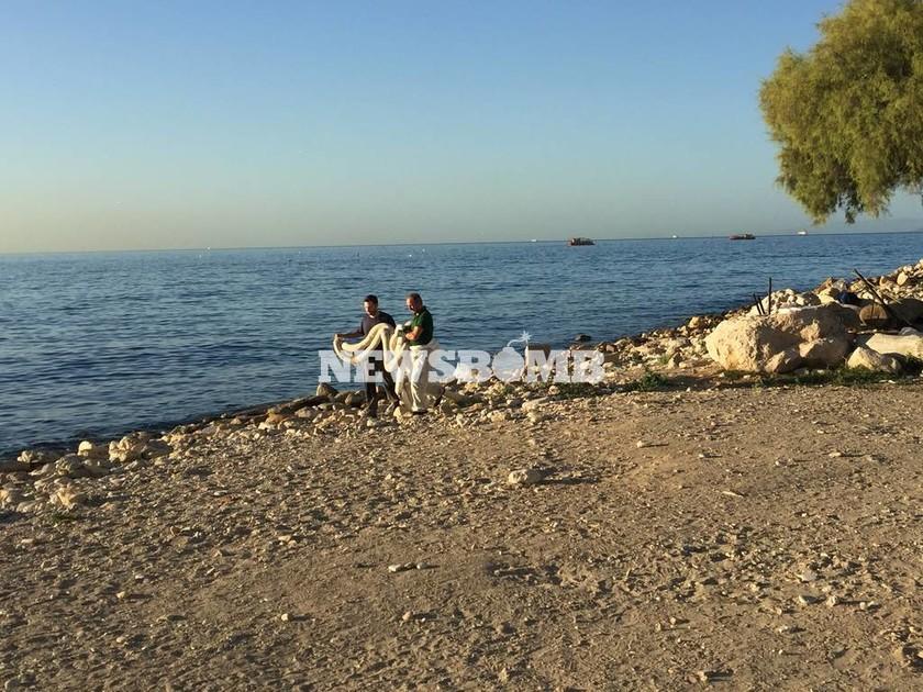 «Νεκρή» θάλασσα ο Σαρωνικός - Οικολογική καταστροφή από τη Σαλαμίνα έως την Πειραϊκή