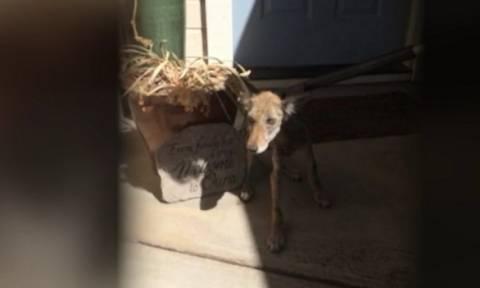 Πίστευε ότι το ζώο που έσωσε απ' το θάνατο ήταν σκύλος! Δύο μέρες μετά ανακάλυψε την αλήθεια (vid)