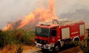 Φωτιά ΤΩΡΑ: Πυρκαγιά στο Αγρίνιο – Οι φλόγες πλησιάζουν τα σπίτια