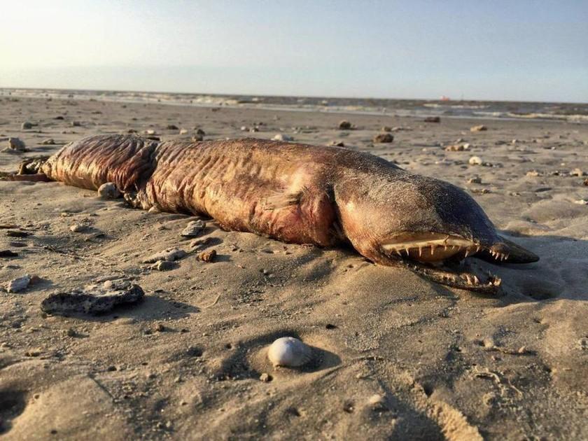 Μυστήριο: Θαλάσσιο τέρας χωρίς μάτια ξεβράστηκε σε παραλία του Τέξας μετά τον τυφώνα Χάρβεϊ! (Pics)