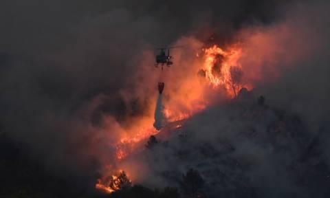 Μανιακός εμπρηστής συνελήφθη τη στιγμή που άναβε νέα φωτιά  - Ευθύνεται για τουλάχιστον 18 πυρκαγιές
