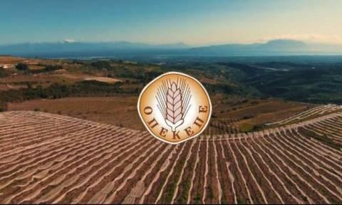 ΟΠΕΚΕΠΕ: Νέες πληρωμές της εξισωτικής σε 1.026 δικαιούχους αγρότες