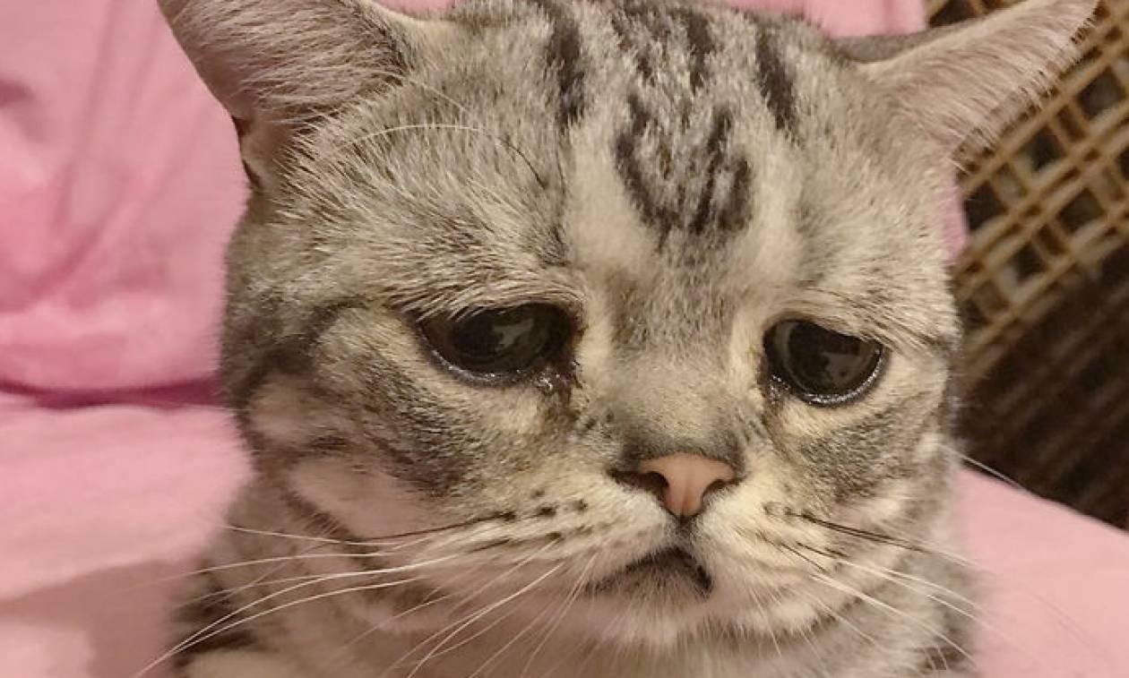 cb2473d614ef Αυτή είναι η πιο θλιμμένη γάτα που έχετε δει… και θα την αγαπήσετε (pics) -  Newsbomb