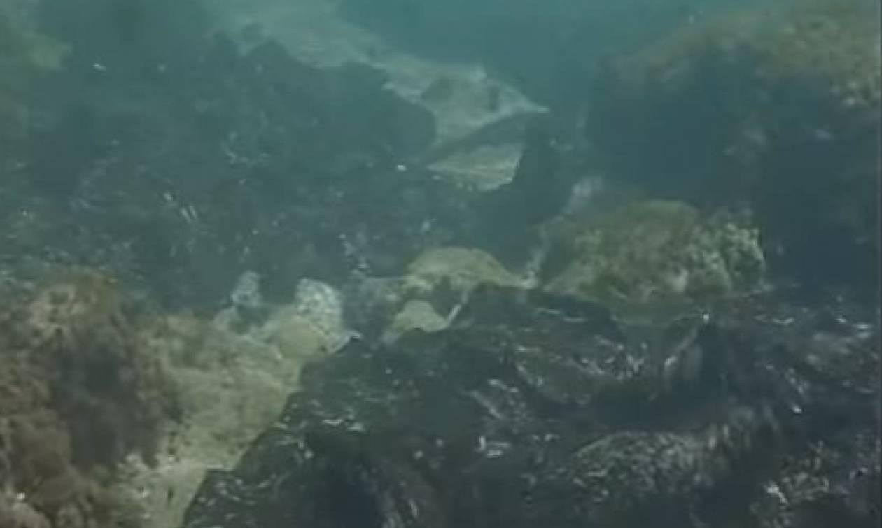 SOS από το «Αρχιπέλαγος»: Ο βυθός είναι γεμάτος μαζούτ - Απειλείται η τροφική αλυσίδα