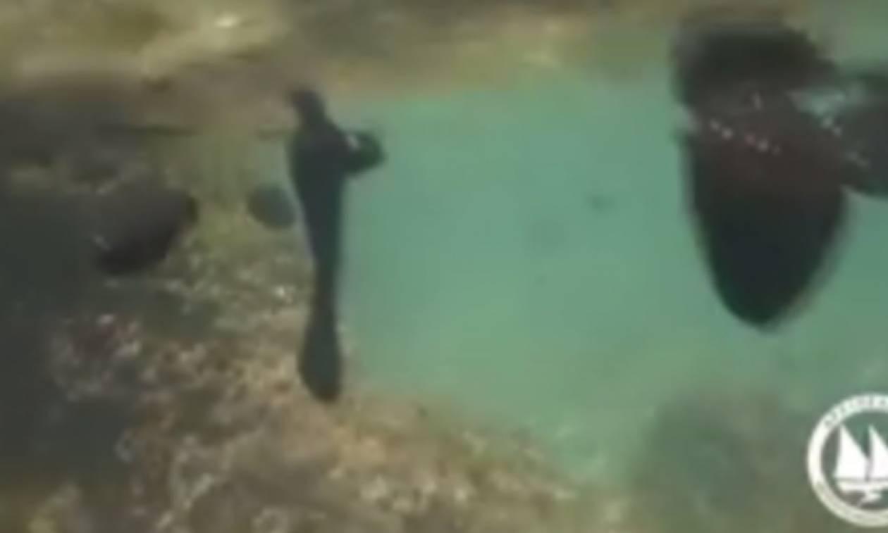 Πετρελαιοκηλίδα: Νέο συγκλονιστικό βίντεο από το βυθό της Σαλαμίνας
