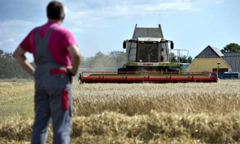 Αγρότες: Πότε και πόσα χρήματα θα δοθούν σε παλαιούς και νέους