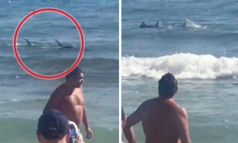 Πανικός σε παραλία - Δύο καρχαρίες ανάμεσα στους λουόμενους (vid)