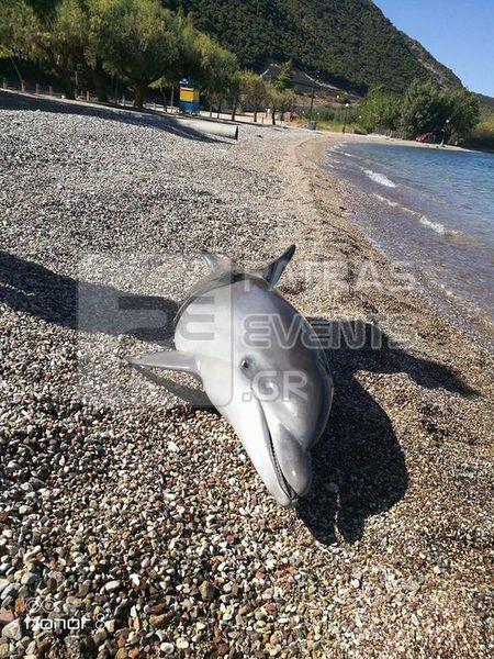 delfini patra3