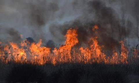 Φωτιά: Δύο νέα πύρινα μέτωπα μαίνονται σε Δράμα και Καβάλα