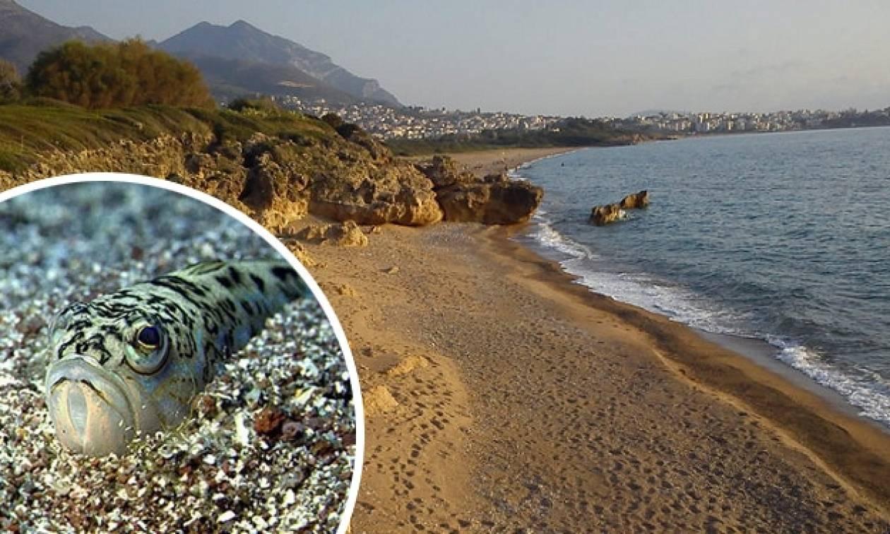 Ψάρια τσιμπούν λουόμενους σε παραλία της Κρήτης!