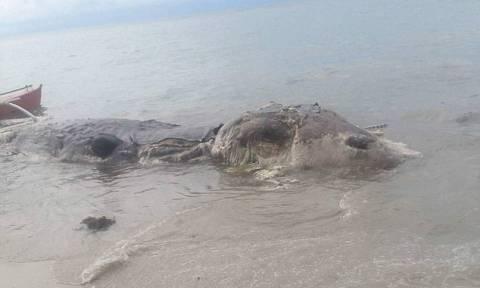 Μυστηριώδες «θαλάσσιο τέρας» ξεβράστηκε σε νησί των Φιλιππίνων (pics+vid)