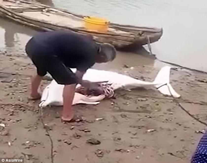 Φρίκη! Ασυνείδητος ψαράς σκοτώνει σπάνιο λευκό δελφίνι (ΣΚΛΗΡΕΣ ΕΙΚΟΝΕΣ)