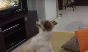 Φοβερό: Το σκυλί που χαίρεται όταν ακούει το Despacito! (video)