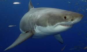 Ψάρεψαν καρχαρία 4 μέτρων στον Αστακό (pics)