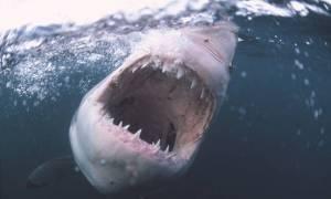 Καρχαρίας «θηρίο» πιάστηκε στα δίκτυα ψαρά στα νερά του Αιγαίου - Δείτε φωτογραφίες