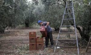 Αύξηση προκαταβολών για τους Έλληνες αγρότες – Τι αποφάσισε η Ευρωπαϊκή Επιτροπή