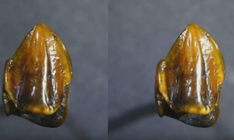 Βρέθηκαν δόντια 9,7 εκατ. ετών - Η συγκλονιστική ανακάλυψη που θα ξαναγράψει την ανθρώπινη ιστορία