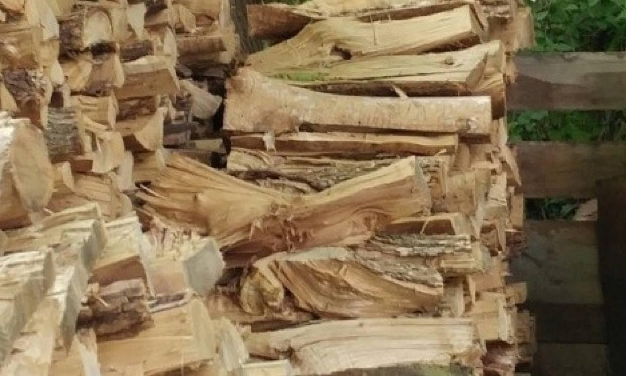 Μέσα στα ξύλα είναι κρυμμένη μια γάτα! Εννιά στους δέκα δεν τη βρήκαν ποτέ... (Photo)