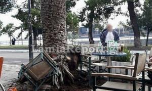 Φθιώτιδα: Κομμάτι από φοίνικα έπεσε στο κεφάλι γυναίκας