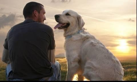Μωρό-σκύλος-άνθρωπος: Οι άνθρωποι συμπονάνε τα σκυλιά περισσότερο από τους συνανθρώπους τους