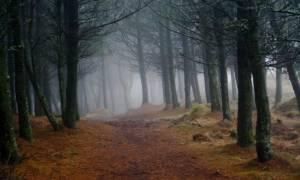 Μυστήριο: Βρήκαν νεκρούς στο δάσος 19χρονο και 20χρονη