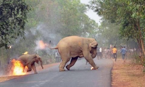 Εικόνα - γροθιά στο στομάχι: Μικρό ελεφαντάκι τυλίγεται στις φλόγες