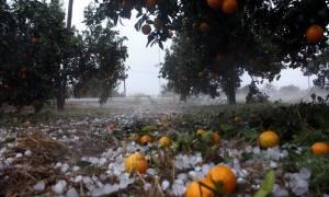 ΕΛΓΑ: Άμεση καταγραφή των ζημιών από τη χαλαζόπτωση στην Πελοπόννησο ζήτησε ο Τατούλης