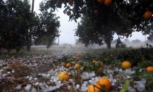 Град нанес серьезный ущерб сельскохозяйственной отрасли Пелопоннеса