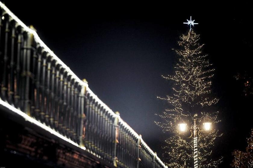 Χριστούγεννα 2017: Φωταγωγήθηκε το ψηλότερο φυσικό δέντρο της Ελλάδας - Εντυπωσιακές εικόνες