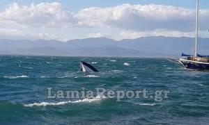Σκάφος βούλιαξε από τους ισχυρούς ανέμους στη Φθιώτιδα (pics)