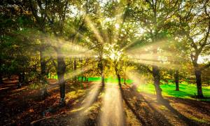 Συγκλονιστικές εικόνες από το δρυοδάσος της Φολόης – Ένα μέρος που πρέπει να γνωρίσετε από κοντά