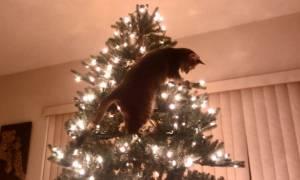 Ολική καταστροφή: Όταν οι γάτες βρέθηκαν αντιμέτωπες με τα χριστουγεννιάτικα δέντρα (Vids)