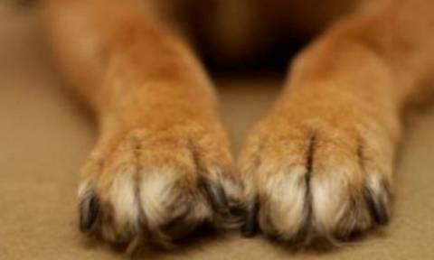 Πρωτοφανής κακοποίηση: Έσερνε το σκύλο του δεμένο από το αυτοκίνητο