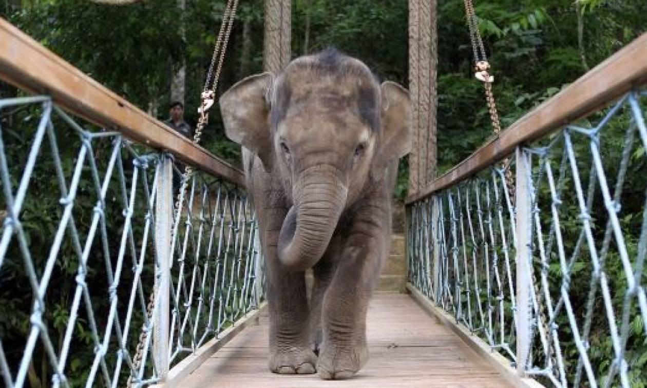 Πεινασμένος ελέφαντας «ισοπέδωσε» χωριό στην Κίνα (Vid)