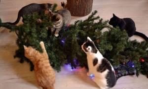 Όταν το αγαπημένο μας κατοικίδιο «καταστρέφει» τις γιορτές των Χριστουγέννων