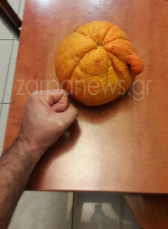 Πορτοκάλι - γίγας για Γκίνες σε περιβόλι των Χανίων