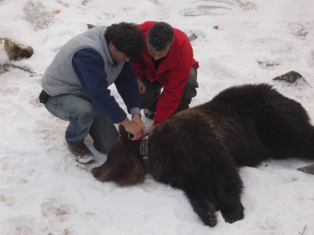 Νευροκόπι: Επιχείρηση απεγκλωβισμού αρκούδας από άδεια υδατοδεξαμενή (pics)