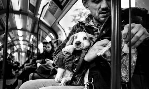 Γλύκες: Οι 15 φωτογραφίες με σκυλιά που θα «λιώσουν» την καρδιά σου!