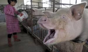 Πρόβλημα για την Τυνησία η γρίπη των χοίρων: Τουλάχιστον 15 νεκροί μέσα σε λίγους μήνες